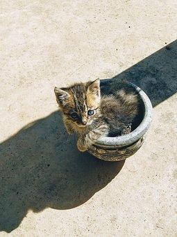 Cat, Kitten, Pet, Feline, Animal, Fur, Kitty, Domestic