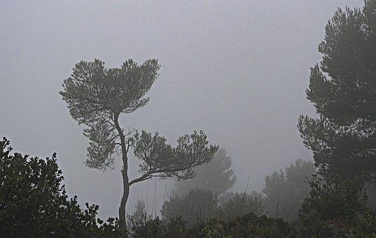 Trees, Fog, Nature, Outdoors, Arboles, Niebla, Montaña