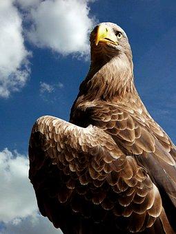 Falcon, Bird, Perched, Animal, Feathers, Plumage, Beak