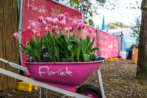 Tulips, Flowers, Wheelbarrow, Floriade, Pink Flowers