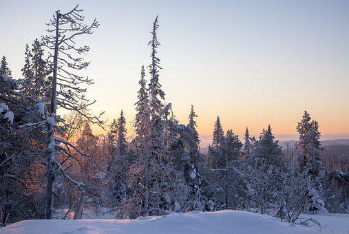 Morning, Sunrise, Forest, Snow, Lapland, Dawn, Winter