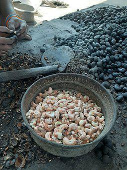 Cashews, Nuts, Snack, Cashew Processing, Roasted
