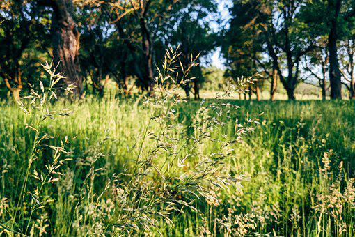 Nature, Meadow, Outdoors, Field, Lawn, Plant