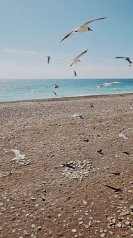 Seagulls, Beach, Outdoors, Ocean, Ornithology, Sea