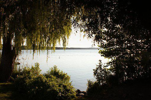 Forest, Trees, Lake, Water, Sea, Ocean, Leaves, Foliage