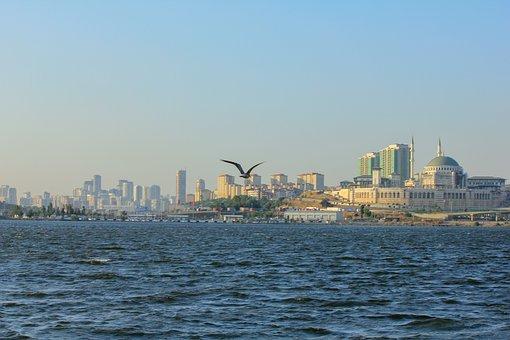 Sea, Seagull, City, Flying, Bird, Animal, Wings, Flight