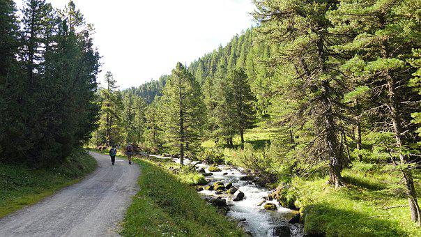 Nature, Trail, Travel, Wilderness, Exploration, Forest