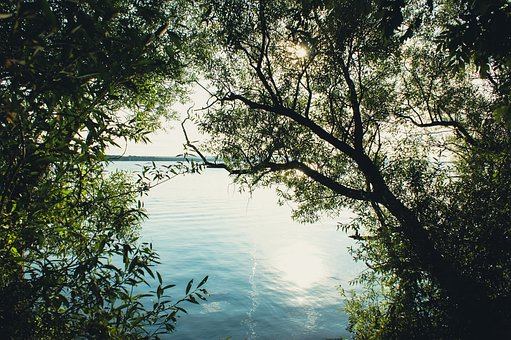 Forest, Trees, Lake, Water, Sea, Ocean, Nature, Leaves