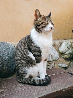 Cat, Stray Cat, South Korea, Gangwon, Animal, Pet