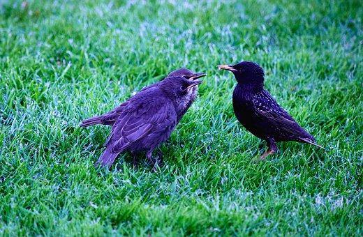 Birds, Hatchlings, Feeding, Lawn, Grass, Wildlife