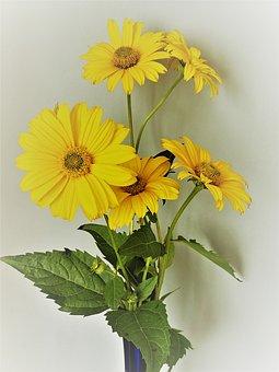 False Sunflowers, Flowers, Vase, Flower Vase, Heliopsis
