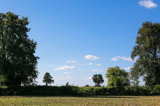 Field, Meadow, Trees, Forest, Nature, Rural, Scenic