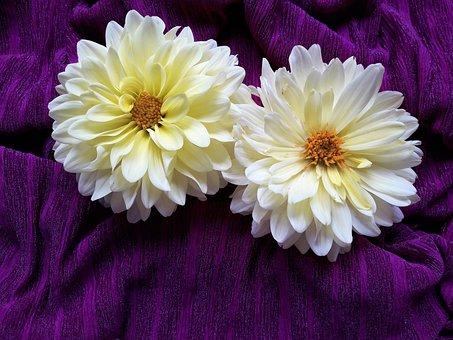 Dahlia, Flowers, Cloth, White Flowers, Petals, Bloom