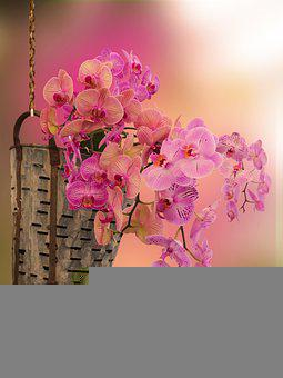 Flowers, Orchid, Bloom, Blossom, Decoration, Nature