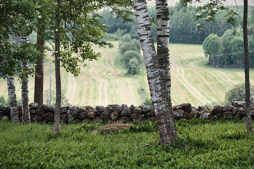 Fields, Nature, Landscape, Trees, Countryside, Hills