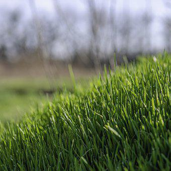 Grass, Nature, Lawn, Yard, Meadow