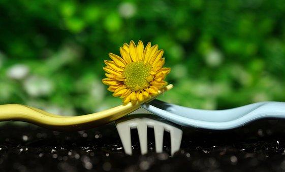 Chrysanthemum, Flower, Forks, Yellow Flower, Bloom