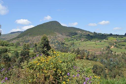 Mountain, Fields, Landscape, Rural, Flowers, Plants