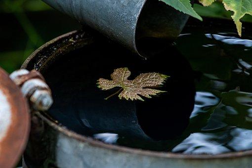 Maple Leaf, Water Barrel, Nature, Autumn Leaves