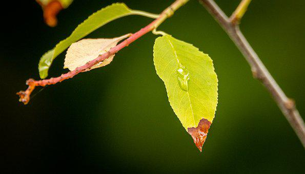 Leaves, Nature, Plant, Green, Water Drop