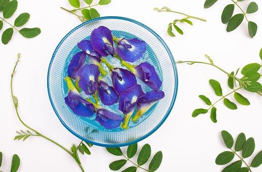 Orchids, Flowers, Bowl, Water, Purple Orchids, Petals