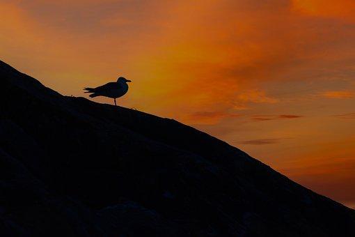 Seagull, Sea, Sunset, Silhouette, Rocks, Beach, Horizon