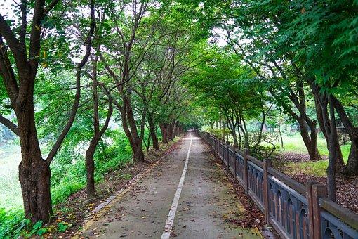 Trail, Road, Colonnade, Nanjing Arboretum, Landscape
