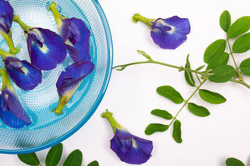 Orchids, Flowers, Purple Orchids, Bowl, Water, Leaves