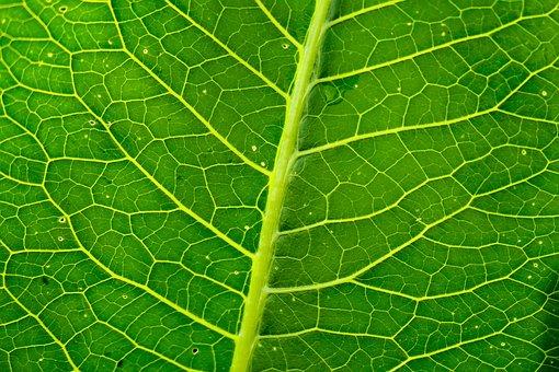 Leaf, Foliage, Veins, Plants, Sheet, Green, Structure