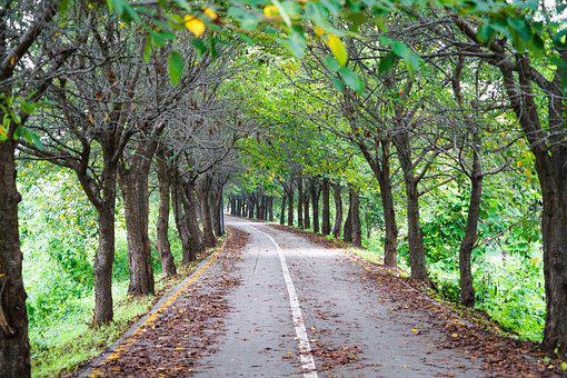 Road, Colonnade, Tree, Forest Road, Landscape, Healing