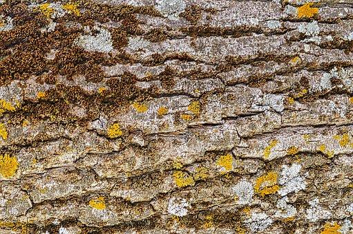 Texture, Stump, Structure, Tree, Log, Pattern