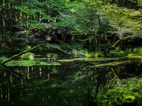 Japan, Water Sources, Ubuyama Kumamoto, Bright Water
