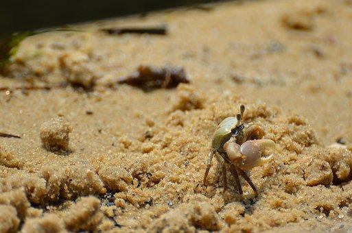 Crab, Crustacean, Seafood, Fishing, King Crab, Beach