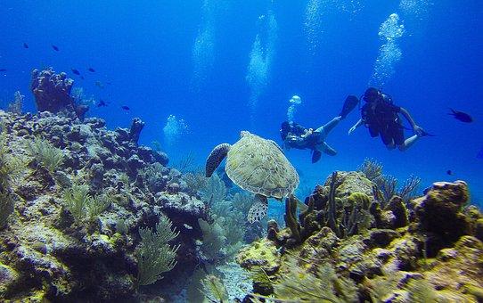 Turtle, Diving, Diver, Bottles, Seabed, Corals