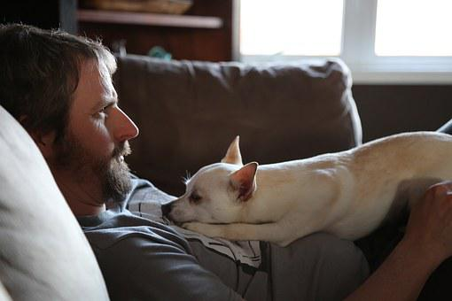 Father, Dog, Chill, Father's Day, Downtime, Puppy