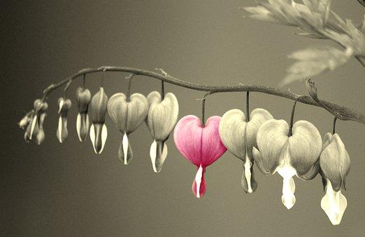 Bleeding Heart, Flowers, Flower, Pink, Ornamental Plant
