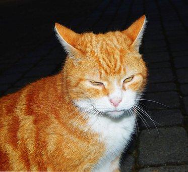 Cat, Cat's Eyes, Mackerel, Adidas, Mieze, Red Tomcat