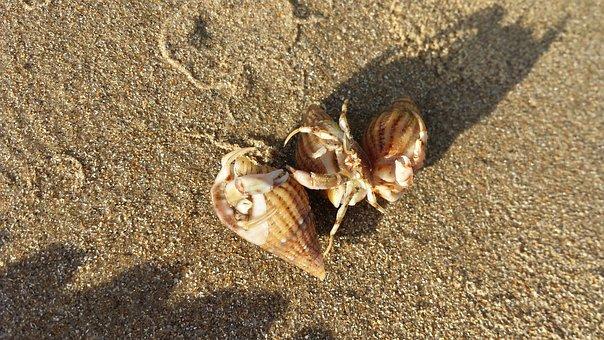 Hermit Crab, Sand, Beach, Nature, Shell, Hermit, Crab