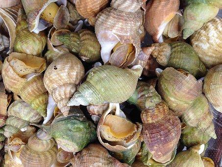 Crustaceans, Whelks, Seafood, Fishing, Shells