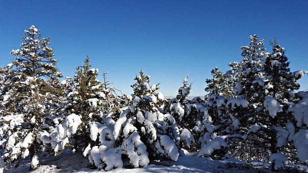 Snow, Cold, Snow Scape, Winter, Landscape, Season