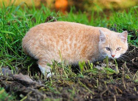 Cat, Young Animal, Domestic Cat, Kitten, Mieze, Playful