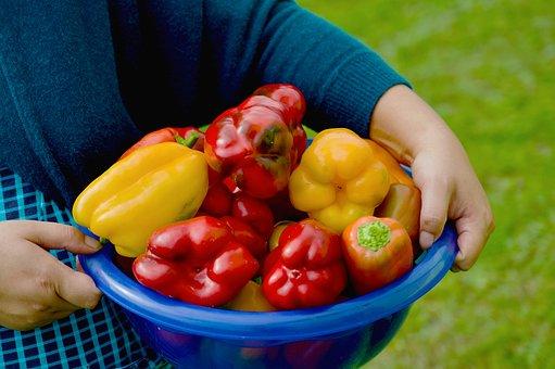 Bell Peppers, Capsicum, Harvest, Vegetables, Fresh