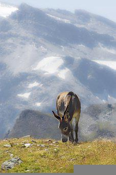 Donkey, Animal, Pasture, Equine, Mammal, Field