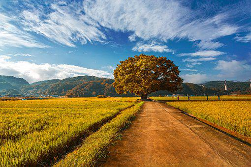 Fields, Countryside, South Korea, Sky, Nature
