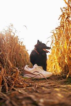 Shoes, Dog, Sneakers, Footwear, Fashion, Animal, Mammal