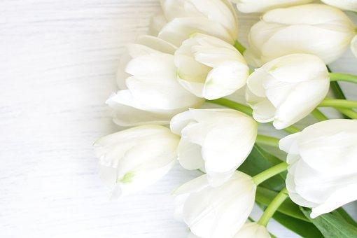 Tulips, Flowers, Bouquet, Petals, Tulip Petals, Bloom