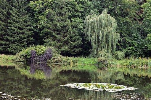 Lake, Pond, Trees, Leaves, Ducklings, Lilies, Water