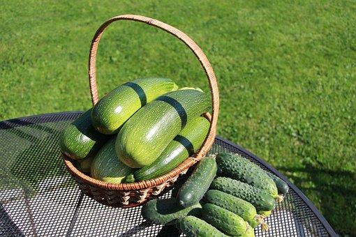 Vegetables, Zucchini, Harvest, Healthy, Organic