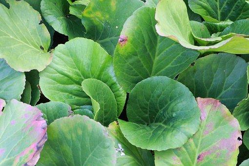 Leafy Greens, Vegetables, Garden, Background, Leaves
