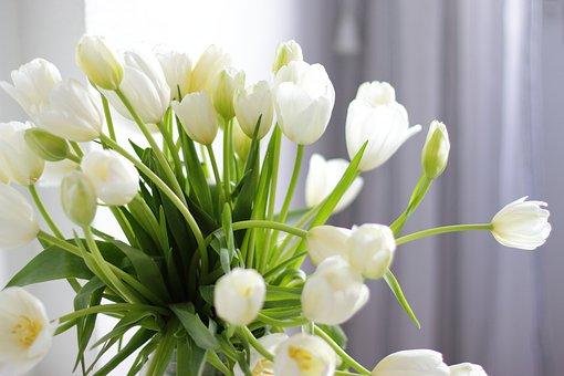 Tulips, Flowers, Bouquet, White Tulips, Petals